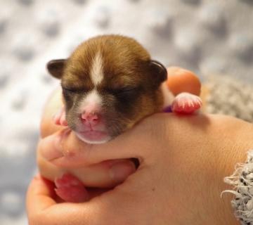 puppies_11