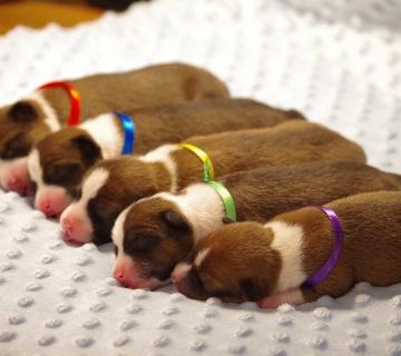 puppies_17